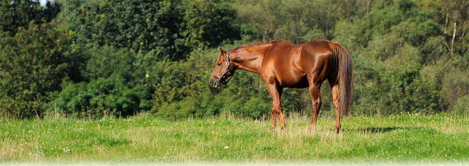 Farnley Breeding and Producing Sport Horses and Ponies in Co Durham